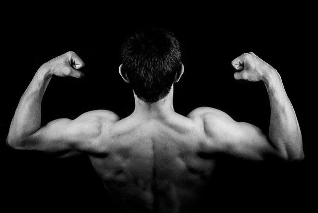 Regeneration Muskeln